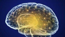 Оказывается, человеческий мозг может хранить петабайт информации